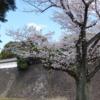 【春季】皇居乾通り一般公開、「桜の通り抜け」はちょうど満開
