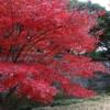 【秋季】皇居乾通り一般公開、「紅葉の通り抜け」は12月初旬が見頃